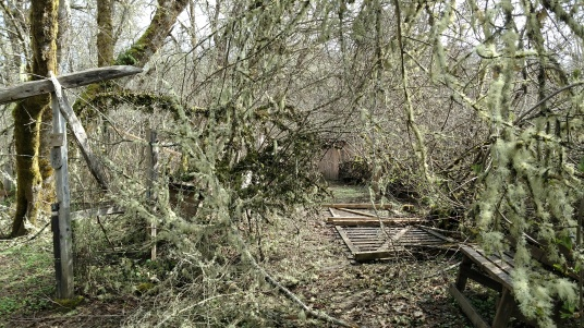 path to Shady Grove