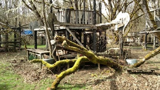 tree at Community House