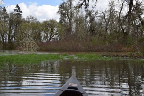 Strawberry-Lane_flooded-Long-Tom-in-back_2371